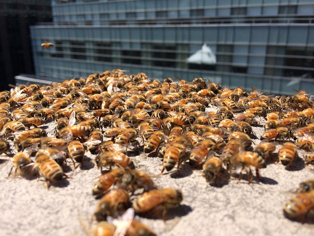 andrew's honey, local honey, nyc honey, honey made in new york, urban beekeeping, urban honey, andrew cote