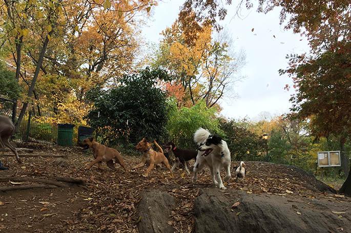 Benji, dog park, dog meetup