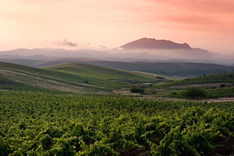 sicily winery