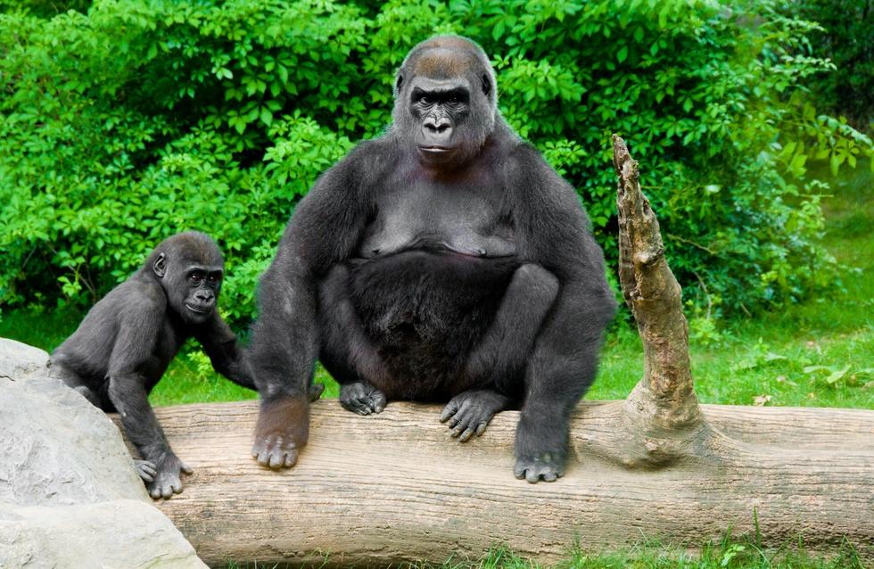 Bronx Zoo, Congo exhibit, Wildlife Conservation Society