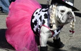 Tompkins Square Halloween Dog Parade