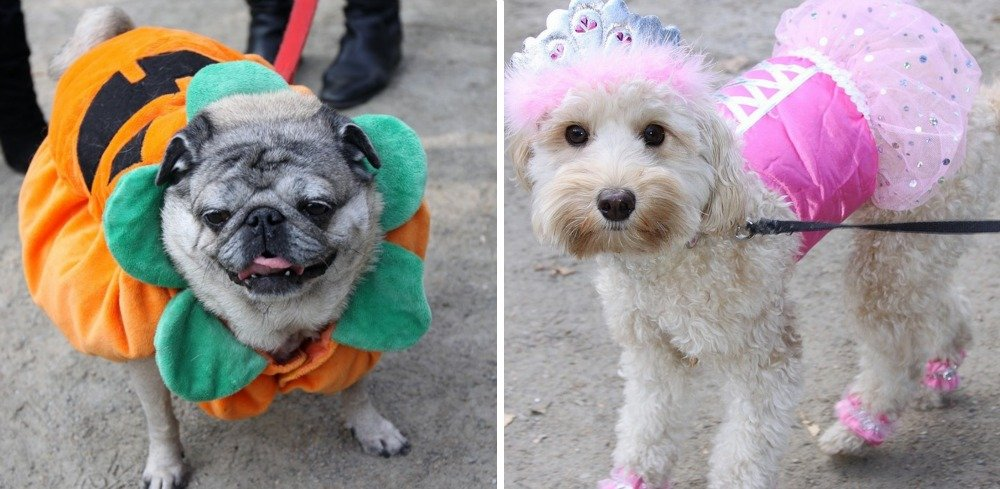 Halloween Dog Parade, Tompkins Square Park