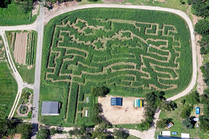 Amazing Maize Maze, Queens County Farm Museum, corn maze