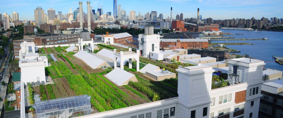 Brooklyn Grange rooftop farm , Brooklyn Grange, rooftop farm brooklyn, rooftop farm nyc