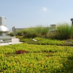 Greensulate, Amy Norquist, green roofs