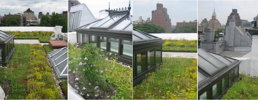 Greensulate, Green Roof, Amy Norquist