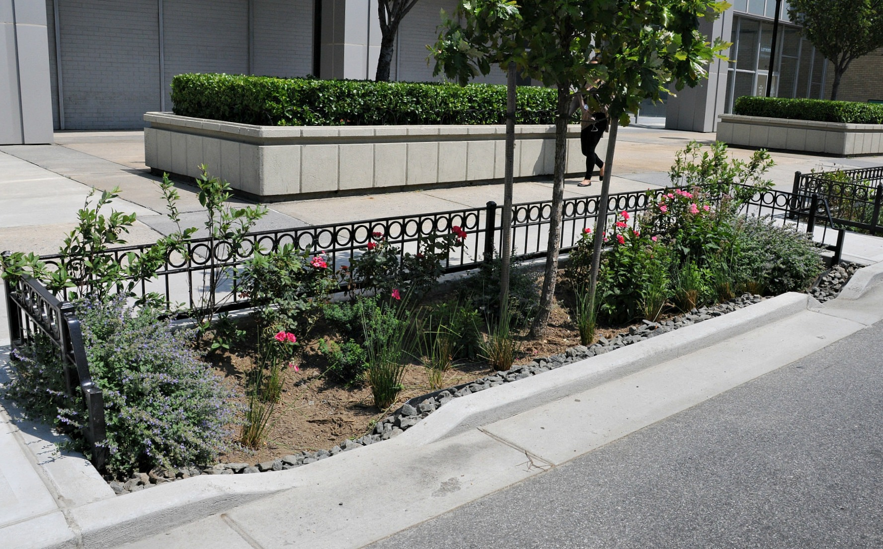 Bioswales face backlash from city residents for being eyesores