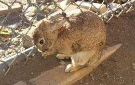 rabbits in brooklyn, gowanus, gowanus rabbits, gowanus bunnies