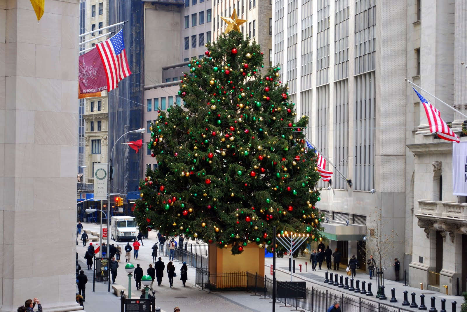 O Christmas Tree Where To See The Biggest Evergreens