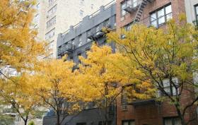 NYC trees
