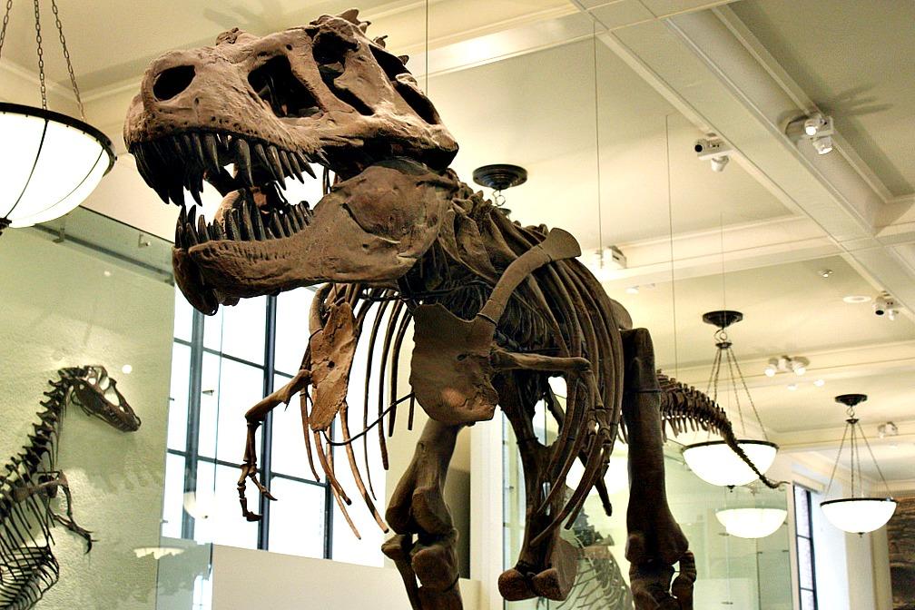 Tyrannosaurus Rex, American Museum of Natural History