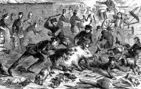 Piggery War