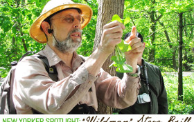 Wildman Steve Brill, NYC foraging