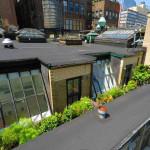 City Hall Tower, City Hall Park, David Howell, wraparound terrace and skylights