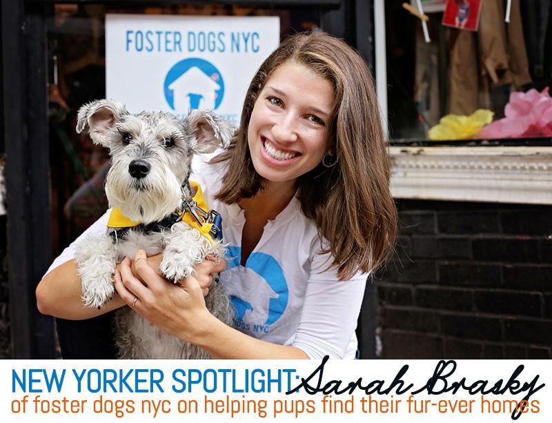 new yorker spotlight sarah brasky of foster dogs nyc on helping
