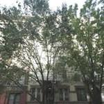 633 East 11th Street, Alphabet City, wood trim, common garden