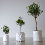 GROWTH, origami planter, Studio Ayaskan
