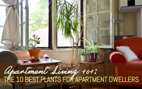 the best plants for apartments