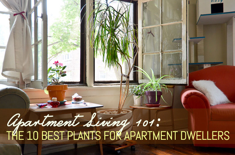 d1c7a8956aa Apartment Living 101  The 10 Best Plants for Apartment Dwellers