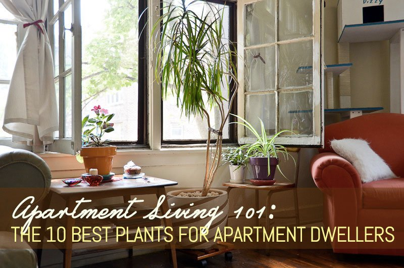 Apartment Living 101 The 10 Best Plants For Apartment Dwellers 6sqft