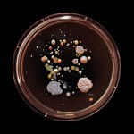 Craig Ward, subway bacteria, Subvisual Subway, bacteria art