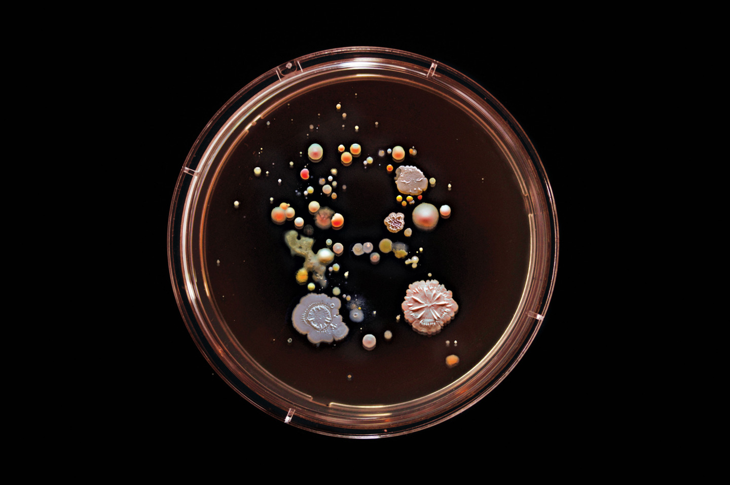 Craig Ward, subway bacteria, Subvisual Subway, bacteria art