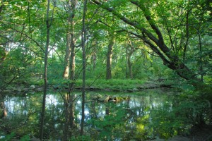 Central Park Azalia Pond, Central Park Conservancy