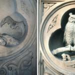 Centra Park-Bethesda Owl