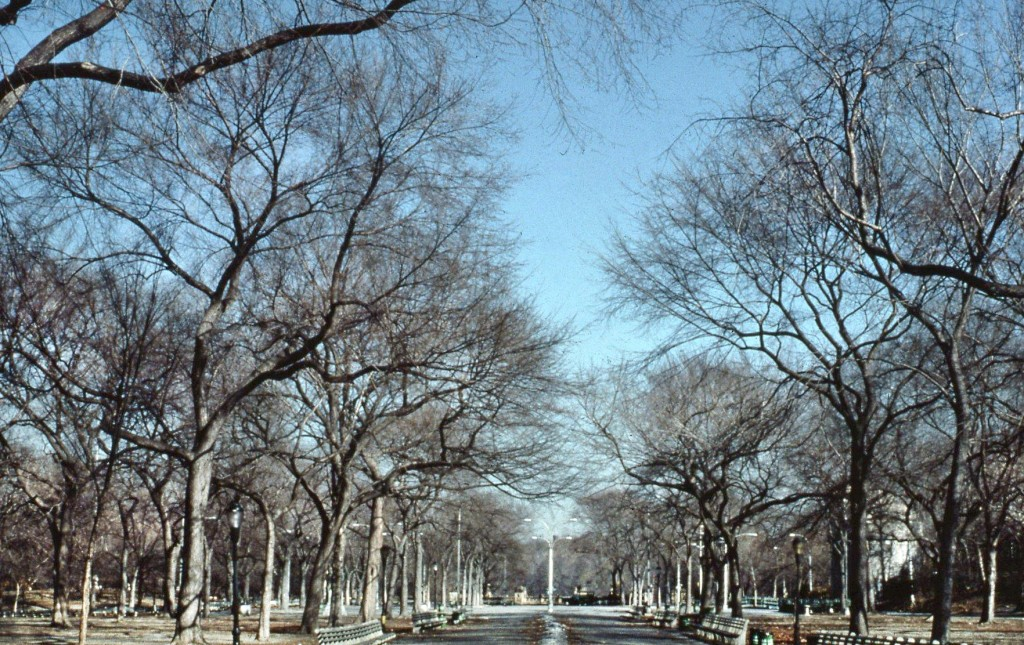 Central Park Mall, Central Park Conservancy, Central Park 1980s