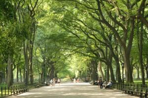 Central Park Mall, Central Park Conservancy