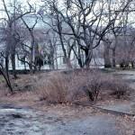 Central Park-Naturalists Walk-80s