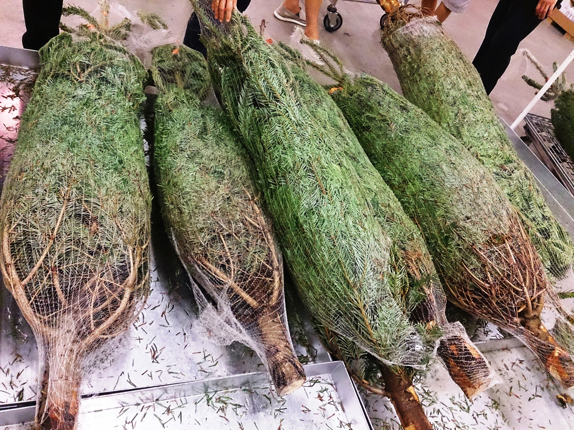 There's an 'exotic' Christmas tree selling for $1,000 in the Village