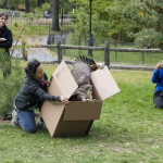 Wild Bird Fund, red-tailed hawk