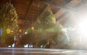 michael neff, suspended forest, knockdown center