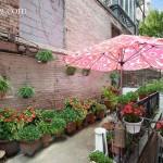 39 east 10th street, common garden, co-op, courtyard