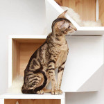 catissa cat tree, cat furniture