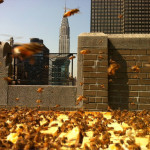 andrew's honey, local honey, nyc honey, honey made in new york, urban beekeeping, urban honey, andrew cote