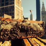 bees in midtown nyc