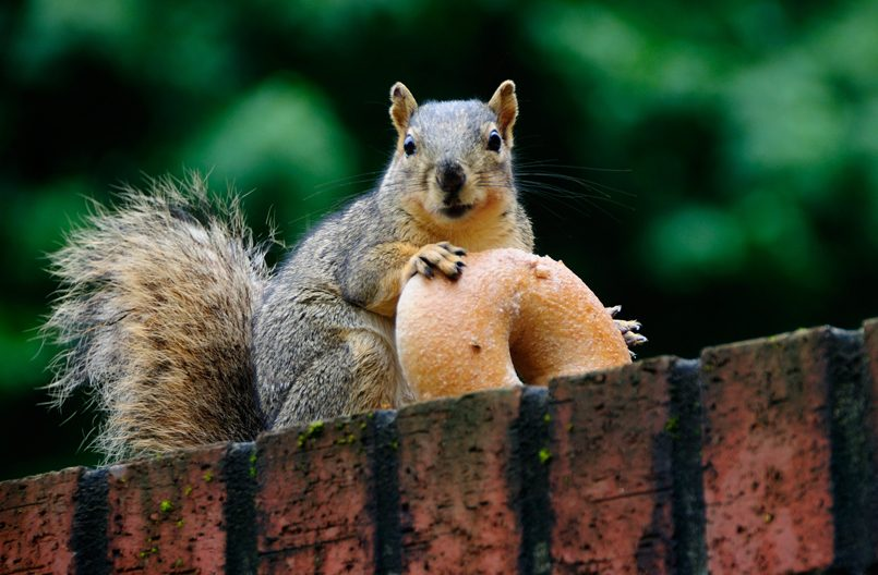 Amid fears of Russian hackers, expert warns of threat from squirrel cyberattack