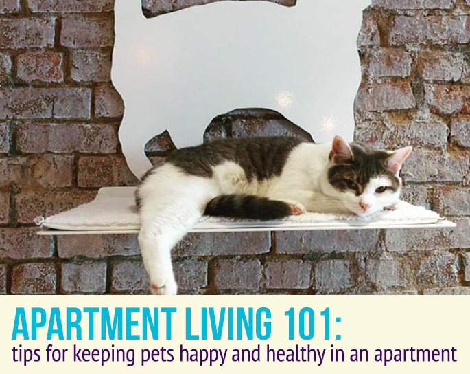 Tips For Keeping Pets Happy And Healthy In An Apartment 6sqft