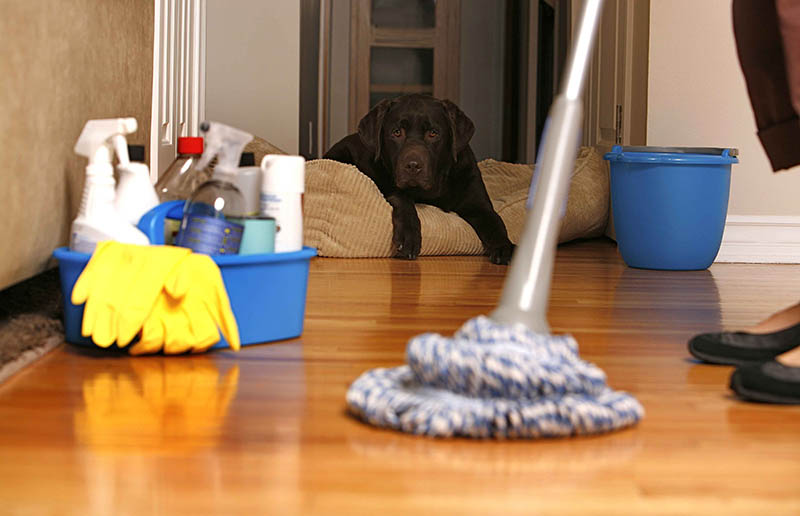 Cleaning products, dog, mopping