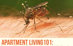 apartment-living-101-mosquitoes