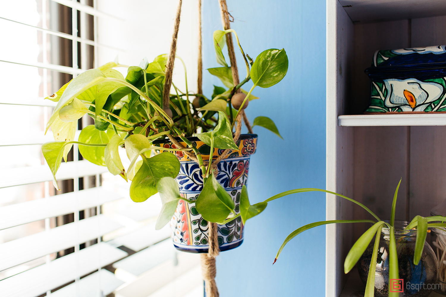Apartment Living 101: The 10 best plants for bathrooms | 6sqft on best plants for basements, best plants for wet areas, best plants for zone 6b, best plants for containers patio, best plants for zone 10, best plants for atriums, best plants for high desert, best plants for feng shui, best plants for glass, best plants for privacy, best plants for sun room, best plants for entryway, plants that thrive in bathrooms, best plants for pool area, best plants for around a patio, best outdoor plants, best plants for water, best plants for gardening, best plants for dark rooms, best plants for decks,