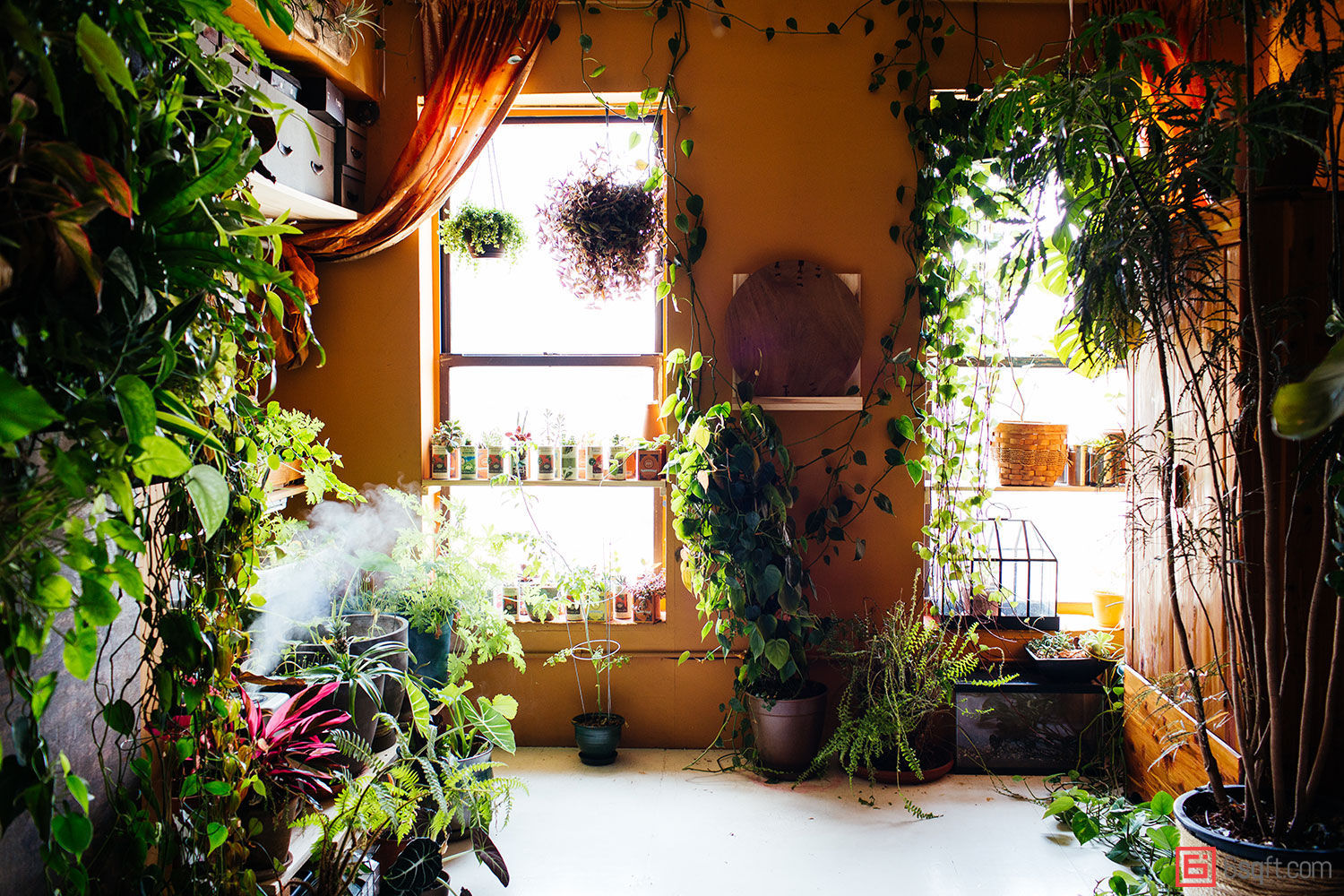 15 Indoor Air-purifying Plants For Your Apartment Or Home