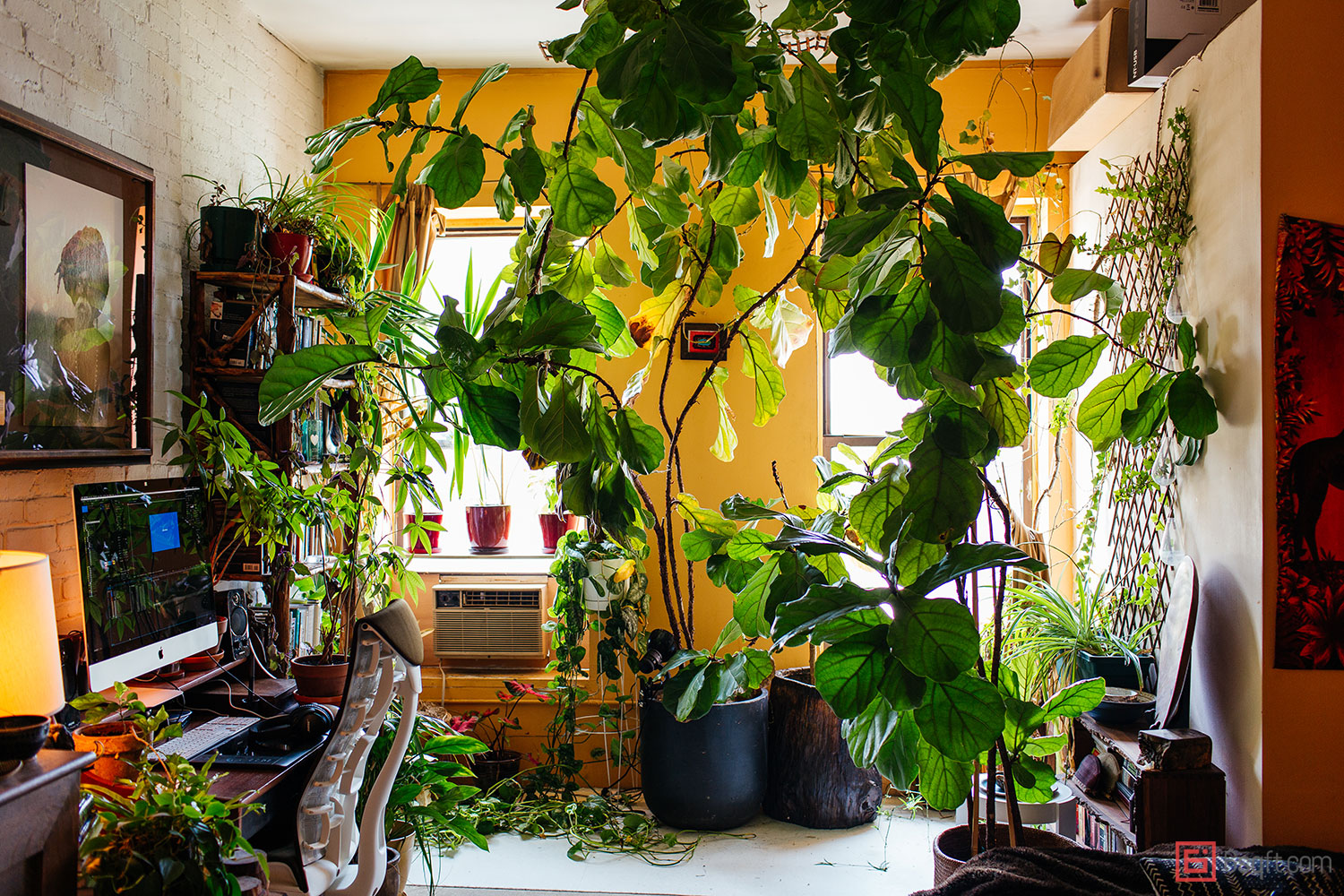 How to style your houseplants, 5 tips from a pro