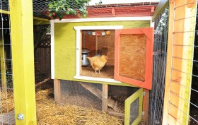 chickens-in-the-city