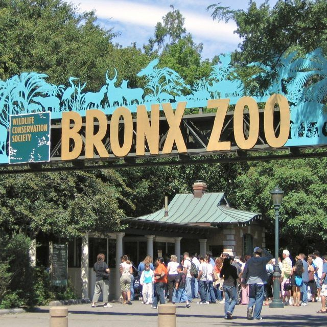 Have breakfast with penguins and panda bears at one of NYC's zoos