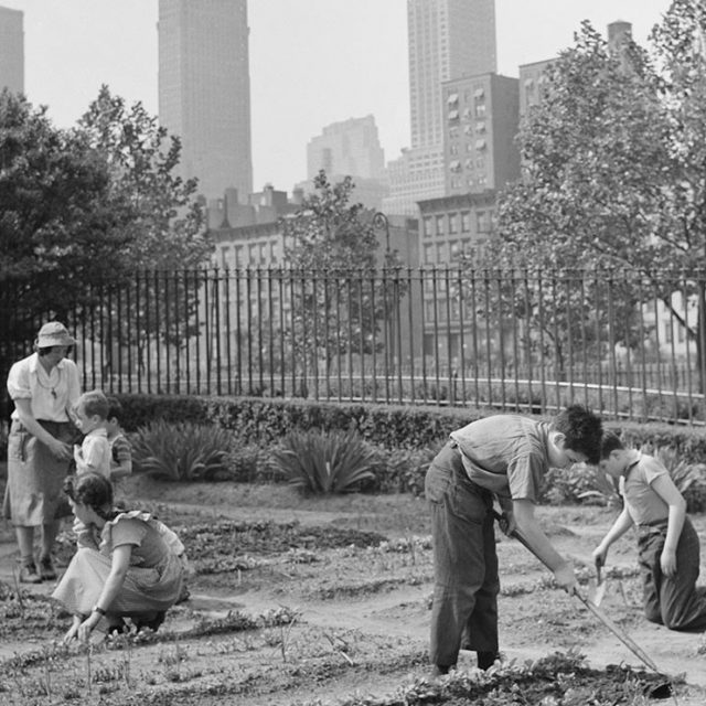 New York's 1940s 'victory gardens' yielded a whopping 200 million pounds of produce