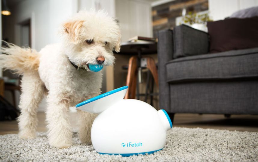 iFetch automatic ball launcher is designed for lazy dog owners