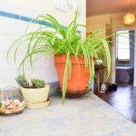 eco-triplex-brooklyn-plants